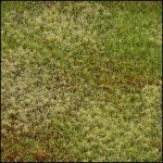 Mixed-Lawn-Untended